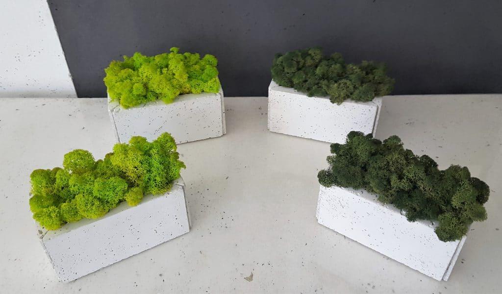 beton architektoniczny doniczka mala mech biala 1024x600 - Chrobotek reniferowy - zieleń dla leniwych