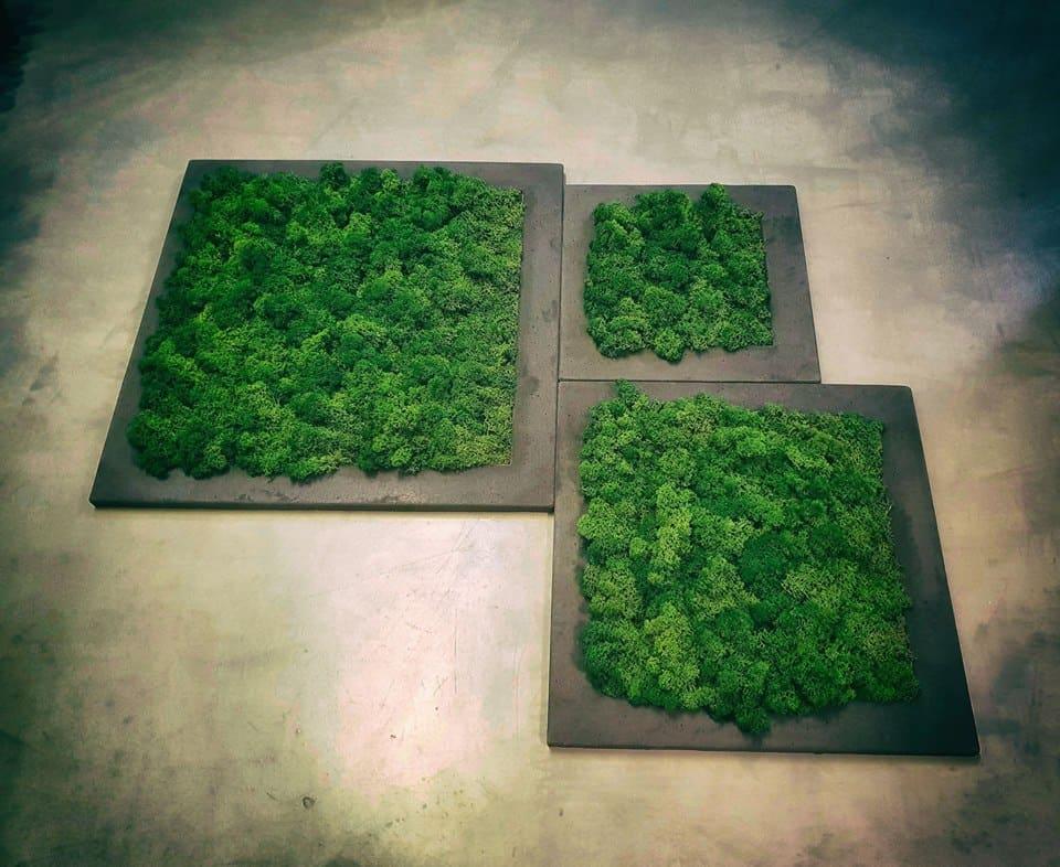 chrobotek reniferowy ramka beton ciemno szary pmdesign - Chrobotek reniferowy - zieleń dla leniwych